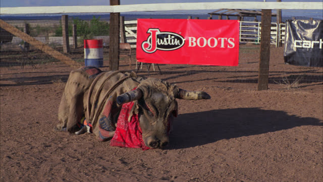 wide angle of people in bull costume running around arena, pen, or enclosure at rodeo. spectators in stands or bleachers in bg. country or rural area. signs or banners hang on fence in bg. - enclosure stock videos & royalty-free footage