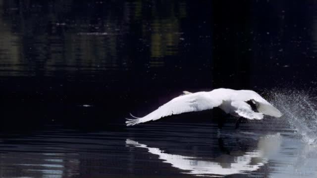 stockvideo's en b-roll-footage met the seine river and birds - water bird