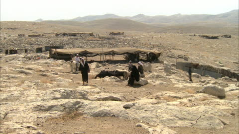 medium angle of several men herding sheep and goats in sandy and rocky desert area. see man dressed in a black robe and white headdress. see him begin to point up at sky and tell others to look up. see tent and mountains in background. middle east. - headdress stock videos & royalty-free footage