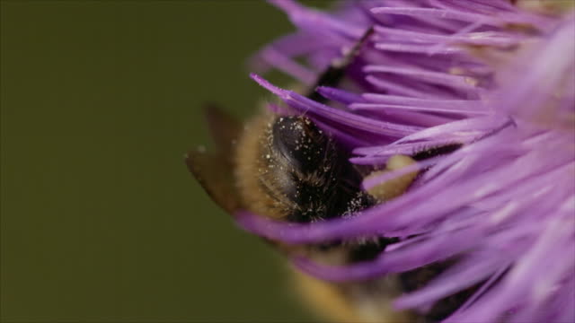 insect in slow motion - pollination stock videos & royalty-free footage
