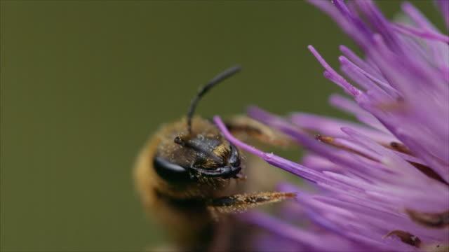 vídeos de stock e filmes b-roll de insect in slow motion - pólen