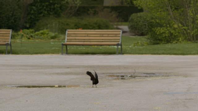 BIRDS IN PUBLIC PARK