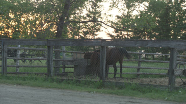 wide angle of two brown horses penned in chicken-wire fence corral by the side of the road. old wagon, trees, grass in background. could be farm field. - chicken wire stock videos and b-roll footage