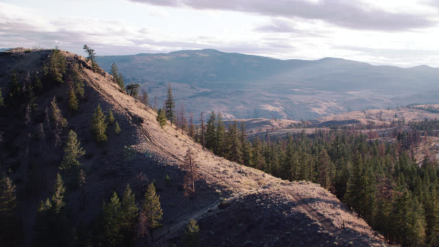 aerial of hill covered in trees or forest. mountains in bg. could be campgrounds or national park. - wyoming stock-videos und b-roll-filmmaterial