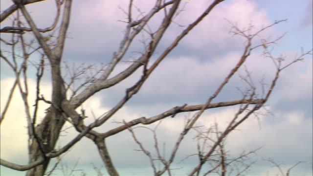 vídeos y material grabado en eventos de stock de pan left to right from bare, gnarled tree branches to top of empire state building. - bare tree
