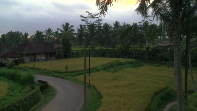 high angle down of road through rice paddies or fields. house with grass thatched roof in bg. palm trees. farmland. tropical. southeast asia. - halmtak bildbanksvideor och videomaterial från bakom kulisserna