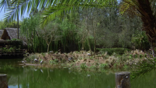 wide angle of lagoon area at los angeles county zoo. jungle or forest with foliage, trees, and lake. island with birds. grass hut in bg. - grass hut stock videos & royalty-free footage
