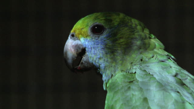 close angle of exotic bird or parrot. could be in cage at zoo. feathers and beak. - gabbia per gli uccelli video stock e b–roll