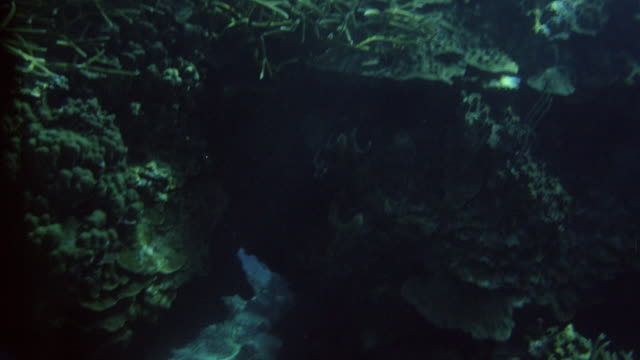 underwater     travel ahead   close to ocean floor fish and coral seaweed rocks plants sand - seabed stock videos & royalty-free footage