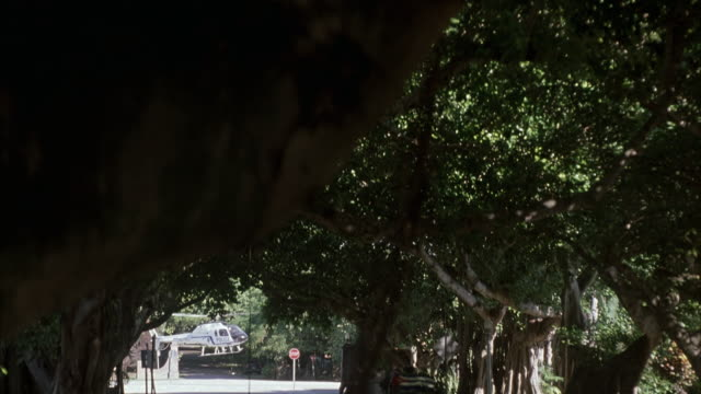 wide angle of top of trees.  shot pans down to motorcade of cars. funeral procession. flowers on rooftop of cars. motorcade stops because police helicopter lands in middle of street. row of cars drives up next to motorcade. shot pans up to trees then back - funeral procession stock videos & royalty-free footage