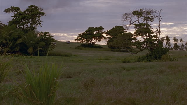 wide angle on grass plain with sparse trees. sunset. see yellow hummer h2 traveling from background through grass followed by blue suv. see military truck trailing behind after hummer h2 passes out of shot. - hummer stock videos & royalty-free footage