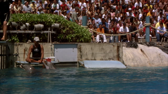 vídeos de stock e filmes b-roll de wide angle. marine pool at animal theme park. crowd in grandstands in bg. trainer rides standing up o two dolphins in front of crowd. dolphins then take trainer underwater and throw him in the air. dolphins then begin doing tricks on their own. preview fi - cetáceo