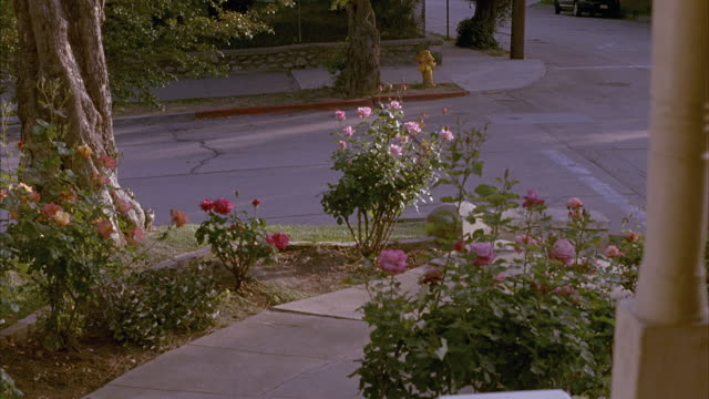vídeos y material grabado en eventos de stock de medium angle of suburban neighborhood house front walkway lined with roses. trees, street, fire hydrant, stone fence seen. suv parked up street. - pared de piedra
