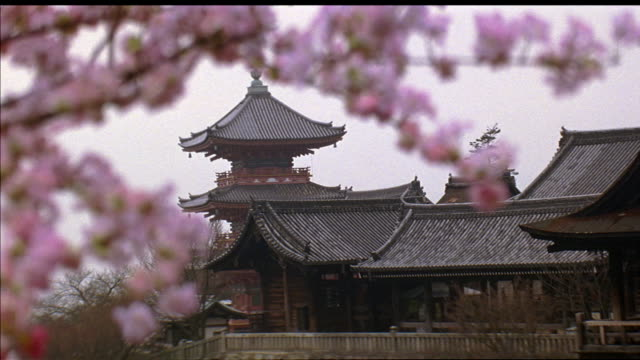 WIDE ANGLE OF JAPANESE SHRINE OR TEMPLE. SEE MULTI-STORY PAGODA BUILDING IN BACKGROUND. SEE BRANCHES OF CHERRY BLOSSOM TREE WITH PINK FLOWERS IN FOREGROUND. JAPANESE ARCHITECTURE.