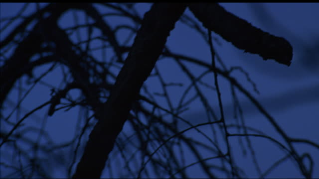 vidéos et rushes de pan down of bare tree branches in night sky. - bare tree