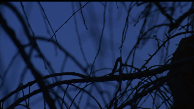 vidéos et rushes de pan down of bare tree branches in night sky to full moon. focus shifts from branches in foreground to moon. - bare tree