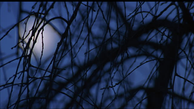 vidéos et rushes de up angle of bare tree branches and full moon in night sky. focus shifts from branches in foreground to moon. - bare tree