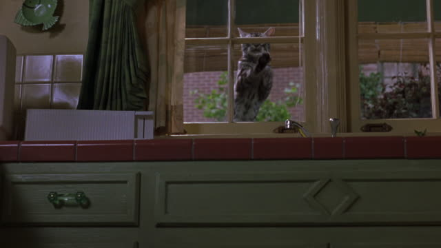 MEDIUM ANGLE ANIMAL STUNT OF BLACK AND GREY TABBY CAT STANDING ON WINDOW SILL OUTSIDE KITCHEN WINDOW OVER SINK. SEE CAT STAND AND PAW AT WINDOW. CAT COULD WANT TO GET IN. SEE GREEN CABINETS, RED COUNTER AND YELLOW WALLS AND WINDOW SILLS.