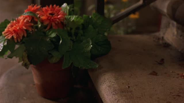 CLOSE ANGLE OF ORANGE CHRYSANTHEMUMS IN TERRACOTTA POT AT BOTTOM OF STEPS. SEE IRON RAILING IN BACKGROUND. POV PANS DOWN TO SHOW WET DEAD LEAVES AT BOTTOM OF STEPS.