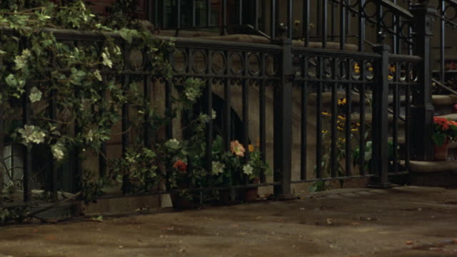 MEDIUM ANGLE OF WROUGHT IRON GATE ON EXTERIOR OF HOUSE. SEE FLOWERS IN POTS ON GROUND, FLOWERED VINES GROWING ON GATE. SEE WHITE PERSIAN CAT AND GRAY TABBY CAT ENTER FRAME. POV TRACKS LEFT TO FOLLOW CATS AS THEY WALK DOWN THE STREET. SEE SHRUB LINING STRE