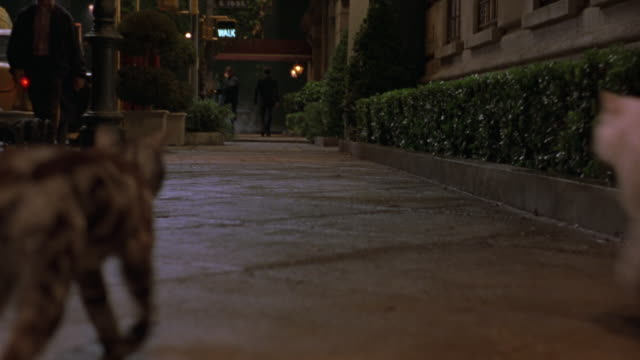 TRACKING SHOT OF CITY SIDEWALK. POV FOLLOWS WHITE PERSIAN CAT AND GRAY TABBY CAT WALKING DOWN SIDEWALK. SEE PEOPLE ON STREET, CARS PARKED ALONGSIDE SIDEWALK. SEE DOORMAN DRESSED IN MAROON SUIT CROSS IN FRONT OF CATS. ANIMALS NEED REVIEW.