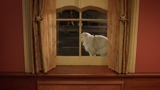 medium angle of window. see peach colored curtains, shade partially drawn. see city street outside through window, cars driving by and people walking on street. see white persian cat sitting outside on window sill, looking into the window. animal needs re - animal drawn stock videos & royalty-free footage