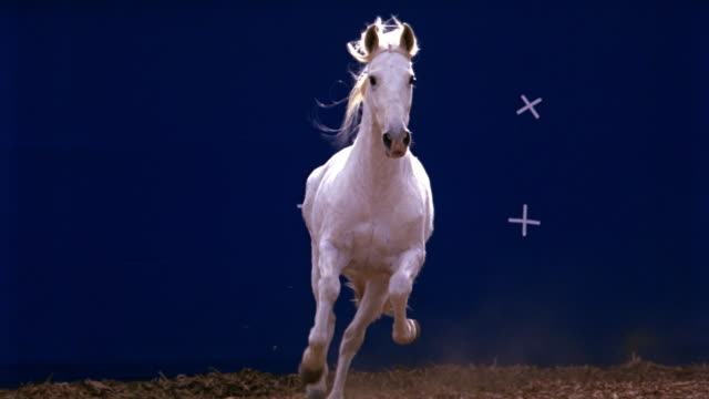 tracking shot of horse running in front of blue screen. animals. - chroma key stock videos & royalty-free footage