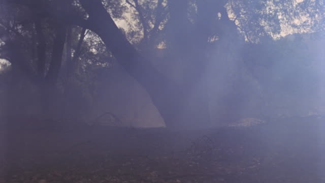 vídeos de stock, filmes e b-roll de hand held walking pov through woods or forest. clouds of smoke blow through. - sony pictures entertainment