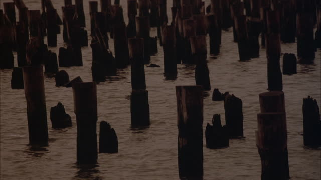 vídeos de stock, filmes e b-roll de wide angle of the pier with broken wooden logs coming out of the water. dusk. could in east river. - sony pictures entertainment
