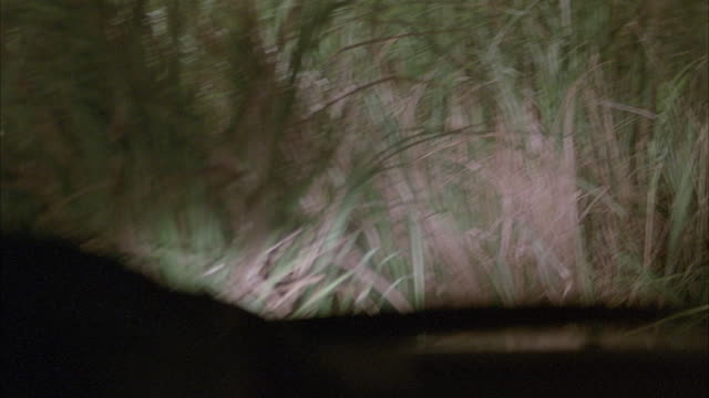 'medium angle driving down road behind other cars. see red bmw in front. see police cars and police men out in front directing traffic. camera veers left, across other side of road, and into bushes and grass on side of road. neg cut. - anno 2001 video stock e b–roll