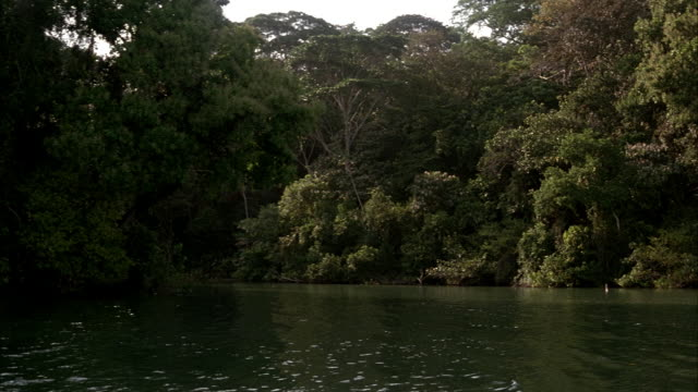 wide angle. pov from boat. boat sails along river in panama past rainforest. - パナマ点の映像素材/bロール