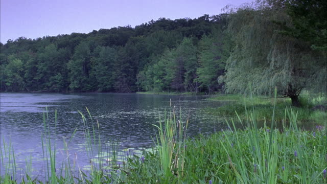 wide angle. shot of lake. grass and weeds in fg. trees lining shore in bg. water on left. rain drops rippling on surface. - lakeshore stock videos & royalty-free footage