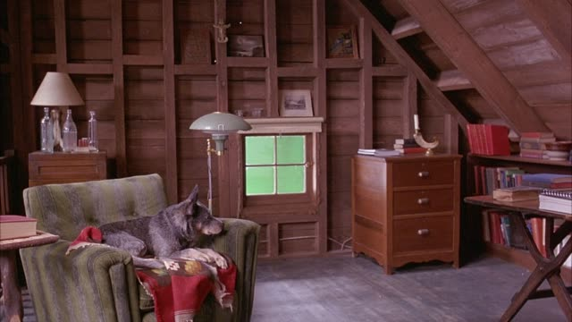medium angle. loft inside cabin. dog lying on reclining chair in bg. dog looks around room. sits up in chair then lays back down again. - 屋根裏部屋点の映像素材/bロール