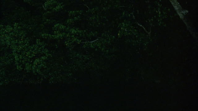 EST WIDE ANGLE. HOUSEBOAT SAILS DOWN RIVER IN JUNGLE FROM BG TO FG AT NIGHT. LIGHTS ON BOAT LIT. SEE PEOPLE ON BOAT.