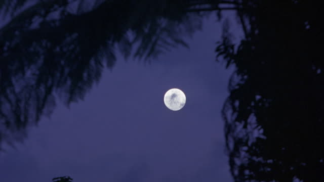 est up angle on full moon. see jungle tree in fg. - moonlight stock videos & royalty-free footage