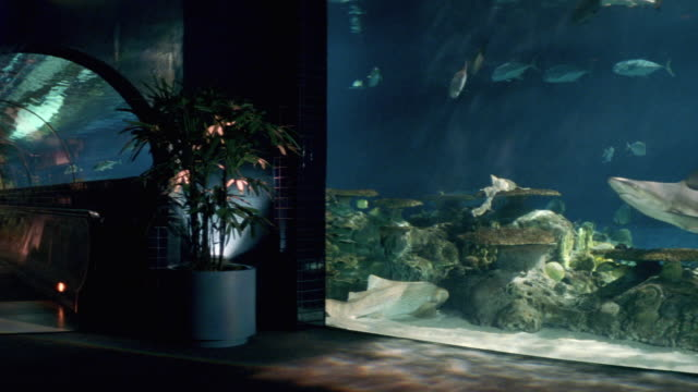 wide angle. inside aquarium. glass display on right. glass tunnel with moving sidewalk in left bg. see a shark, fish and other marine animals swimming around. - other stock videos & royalty-free footage