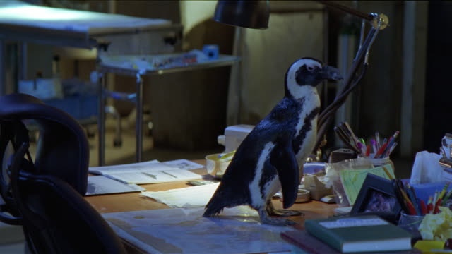 MEDIUM ANGLE. PENGUIN SITTING ON DESK. LAMP, PAPERS, PENCILS AND SUPPLIES ON DESK.