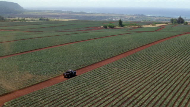 vídeos de stock, filmes e b-roll de aerial view of pineapple plantation, farm field panning across the field. camera tracks blue pickup truck driving along red dirt road. see pacific ocean in background. farmlands. - plantação