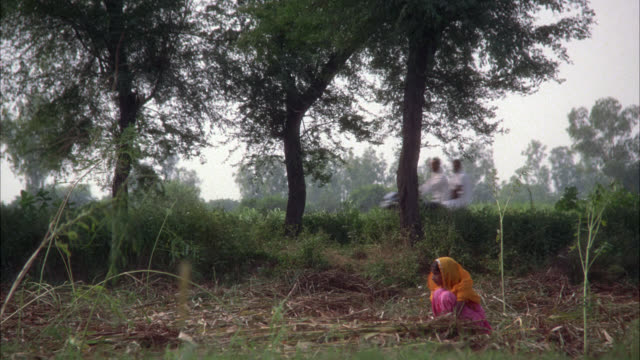 medium angle of young girl wearing sari picking grass in field. other women or young children sit in field. could be workers. bull pulls cart on country road in bg. bicycles and car or taxi go by on road. countrysides or rural areas. - other stock videos & royalty-free footage