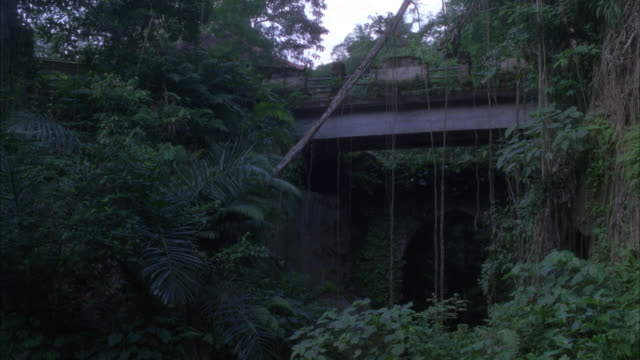 WIDE ANGLE OF WOMEN WALKING ACROSS BRIDGE IN JUNGLE OR RAINFOREST, CARRYING FOOD ON THEIR HEADS. WOMAN RIDING BICYCLE. TROPICAL PLANTS, TREES.