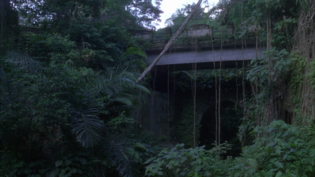UP ANGLE OF BRIDGE IN JUNGLE OR RAINFOREST. VINES HANGING FROM TREES. TROPICAL PLANTS. WOMAN RIDING BICYCLE.