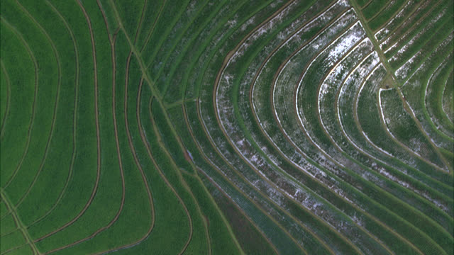 AERIAL OF TERRACED RICE PADDIES OR FIELDS. FARMLAND IN COUNTRYSIDE OR RURAL AREA. PALM TREES AND TROPICAL PLANTS. SOUTHEAST ASIA. SUN REFLECTING IN WATER. GREEN AND LUSH.