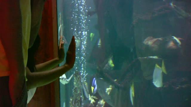 vidéos et rushes de aquarium de poissons en haute définition 1080 i - groupe moyen d'animaux