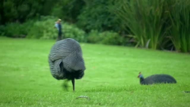HD 1080 i famille de South African Guinée manger 2
