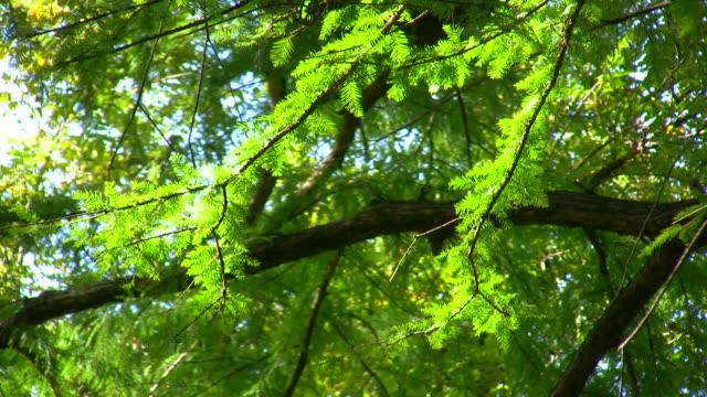 hd 1080 i 森の木立 6 - 木を抱く点の映像素材/bロール
