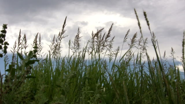 hd 1080i grass blowing in west texas breeze 2 - prairie stock videos & royalty-free footage