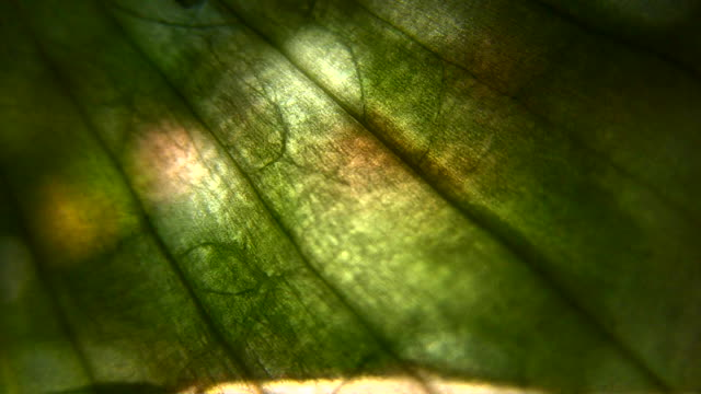 hd 1080i grit abstract through plant skin with branches - peel stock videos & royalty-free footage