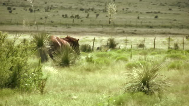 hd 1080i horse kicking and running - one animal stock videos & royalty-free footage