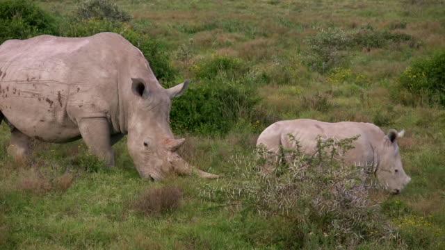 HD 1080i Rhinoceros 2