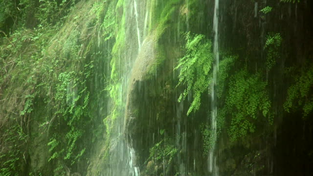 hd 1080i waterfall - fern stock videos & royalty-free footage